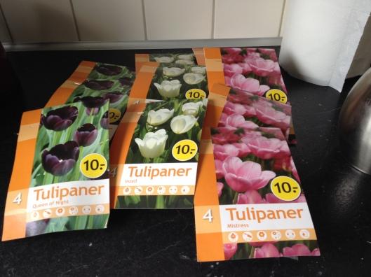Tulipanløg indkøbt i Netto.