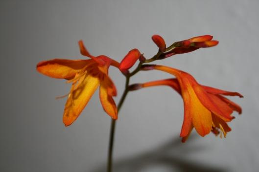 Smuk blomst og vidunderlig farve og den må gerne brede sig rigtig meget.