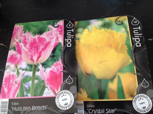 Tulipanløg købt i Lidl.