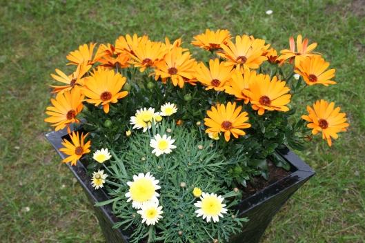 Min eneg krukke....elsker de gule/orange farver.