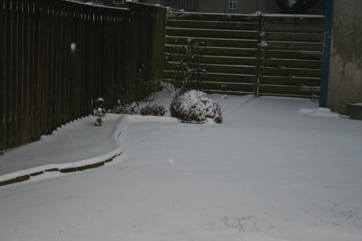 Årets første sne d. 8 januar 2016